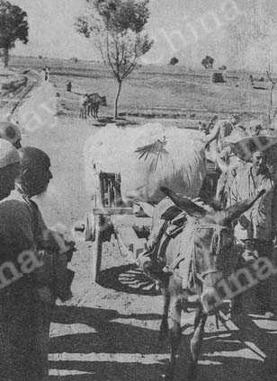 A peasant takes his cotton to market. China's 1951 cotton crop is the biggest in her history.
