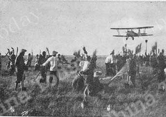 As the planes spray insecticide, peasants beat locusts into the middle of a ring and kill them.