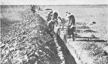 The trench method. Locusts which fall into these ditches are killed with